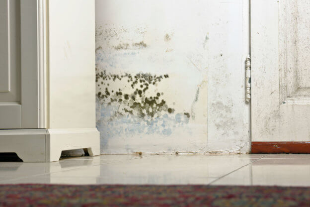 LeakSmart Blog Don't Give Mold A Home