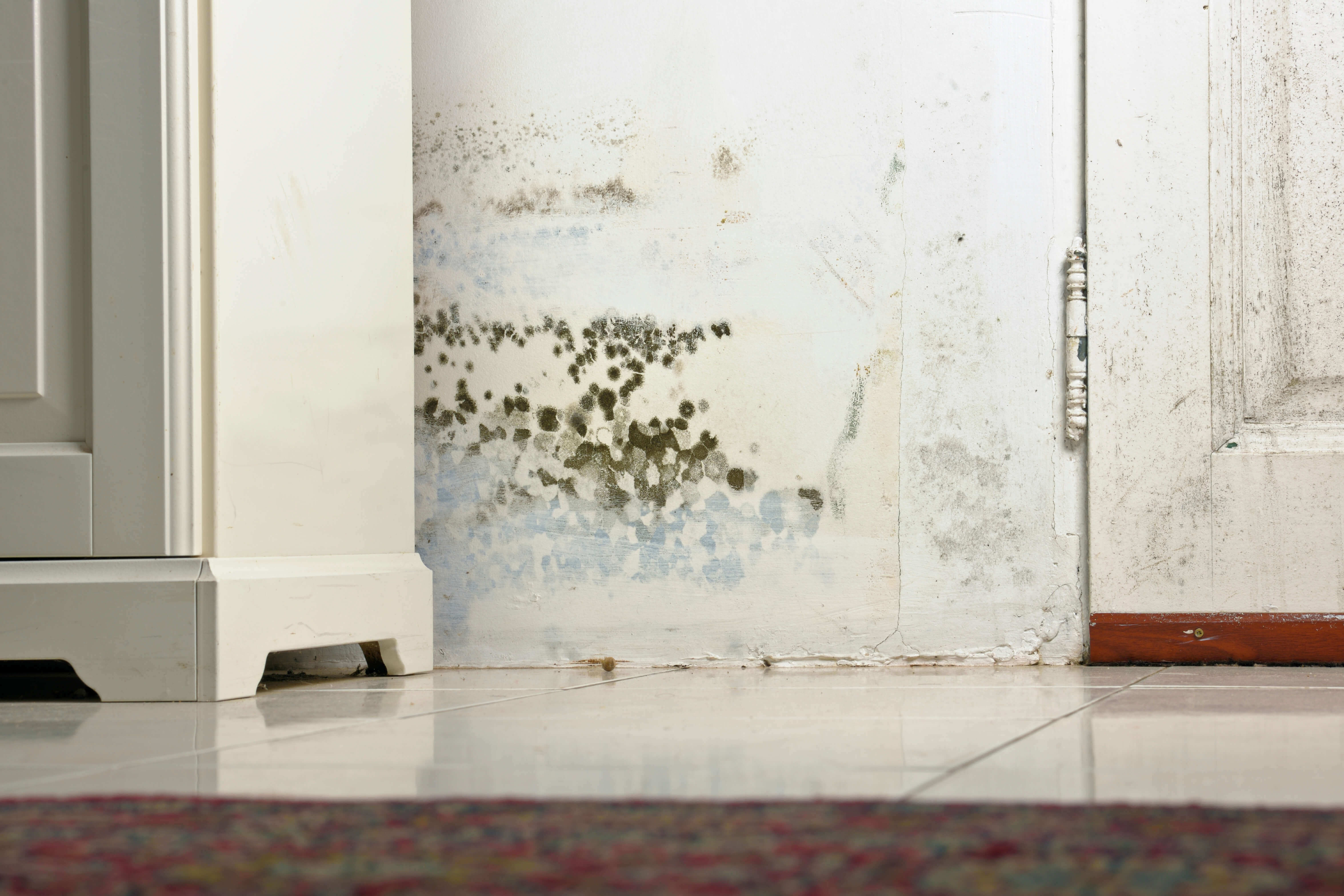 Don't Give Mold A Home